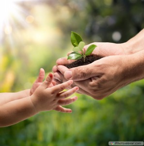 Hands-of-a-child-taking-a-plant-from-the-hands-of-a-man